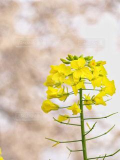 春の写真・画像素材[570350]