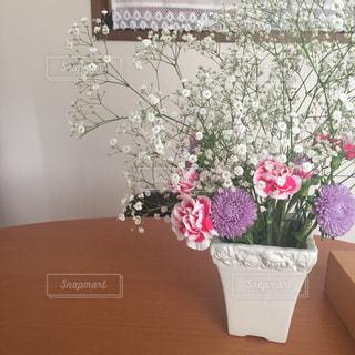花の写真・画像素材[520564]