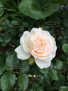 花の写真・画像素材[535189]