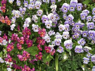 花の写真・画像素材[535190]