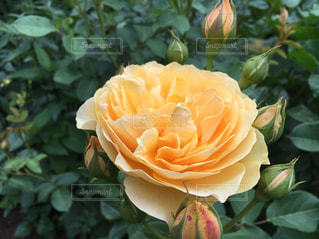 花の写真・画像素材[535191]