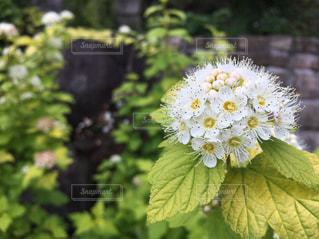 花の写真・画像素材[535192]