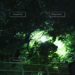 木の写真・画像素材[521044]