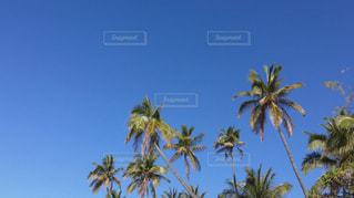 空の写真・画像素材[523021]