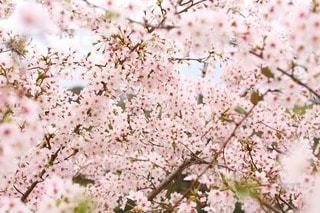 花の写真・画像素材[24680]