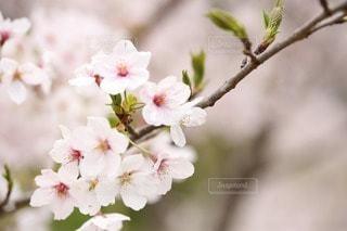 花の写真・画像素材[24681]