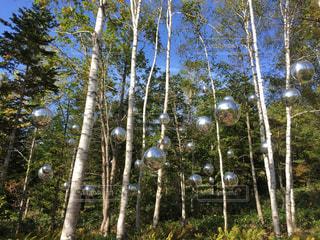 森林の写真・画像素材[521171]