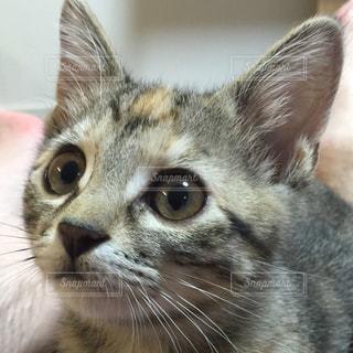 猫 - No.521487