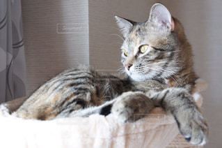 猫 - No.547023