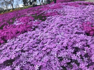 花の写真・画像素材[521576]