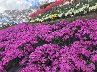 花の写真・画像素材[521577]