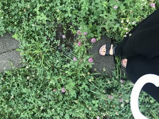 花の写真・画像素材[644600]