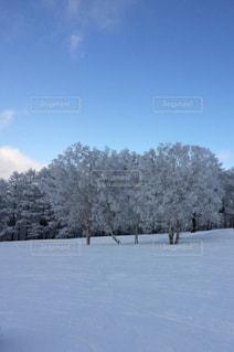 冬の写真・画像素材[521643]