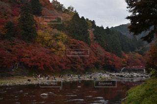秋の写真・画像素材[522358]