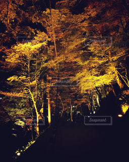 秋の写真・画像素材[522360]