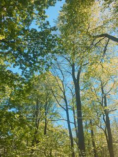 森林の写真・画像素材[522071]
