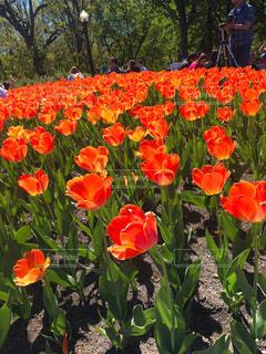 花の写真・画像素材[522089]