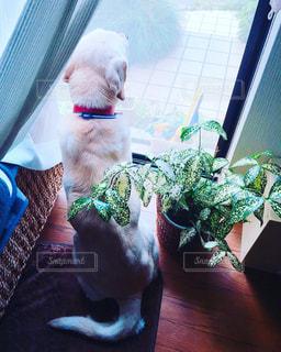 犬の写真・画像素材[533606]