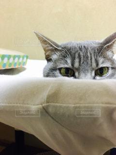 猫の写真・画像素材[521990]