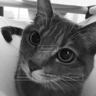 猫 - No.521991