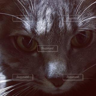 猫 - No.526503