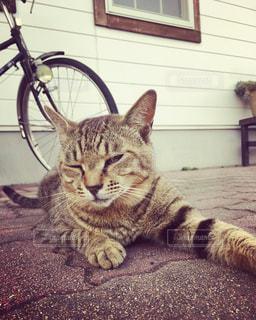 猫の写真・画像素材[538534]