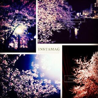 樹木の写真・画像素材[522090]