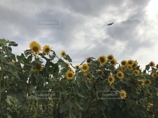 自然の写真・画像素材[636640]