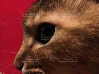 猫の写真・画像素材[536191]