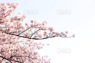 花の写真・画像素材[551085]