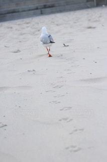かわいい足跡の写真・画像素材[772412]