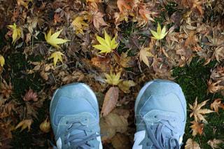 秋の足元 - No.904379