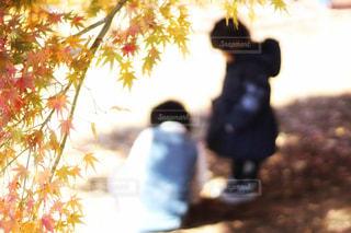 紅葉の木の下での写真・画像素材[914045]