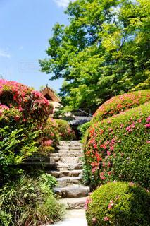 詩仙堂の日本庭園の写真・画像素材[1232852]