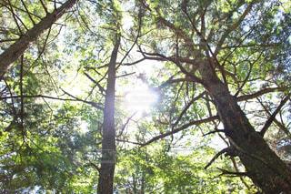 青木ヶ原樹海の写真・画像素材[1416602]