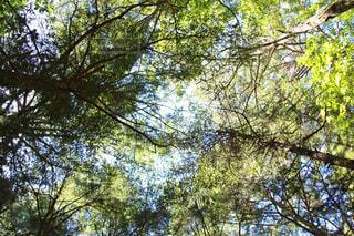 青木ヶ原樹海の写真・画像素材[1416603]