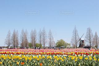 あけぼの山農業公園にての写真・画像素材[2038329]