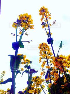 花の写真・画像素材[522947]