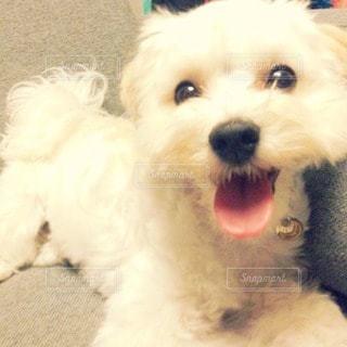 犬の写真・画像素材[41933]