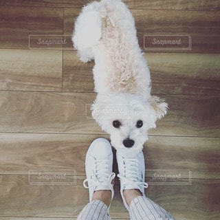 犬の写真・画像素材[50899]