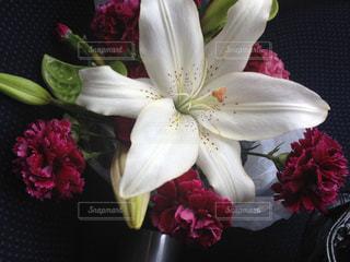 花の写真・画像素材[526745]