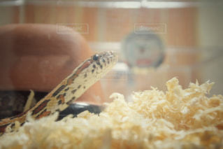 近くに爬虫類のアップの写真・画像素材[1137207]