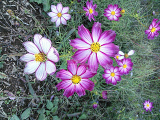 花の写真・画像素材[530840]