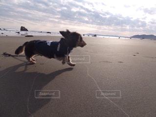 七里ヶ浜の写真・画像素材[523749]