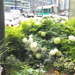 広島市紙屋町交差点付近の市電と植込みの風景の写真・画像素材[2262244]