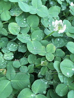 雨の写真・画像素材[529168]