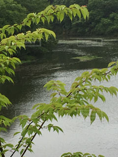 公園の写真・画像素材[529339]