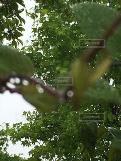 雨 - No.529357