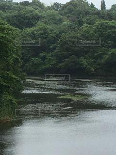 公園の写真・画像素材[529368]