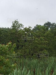 公園の写真・画像素材[529371]
